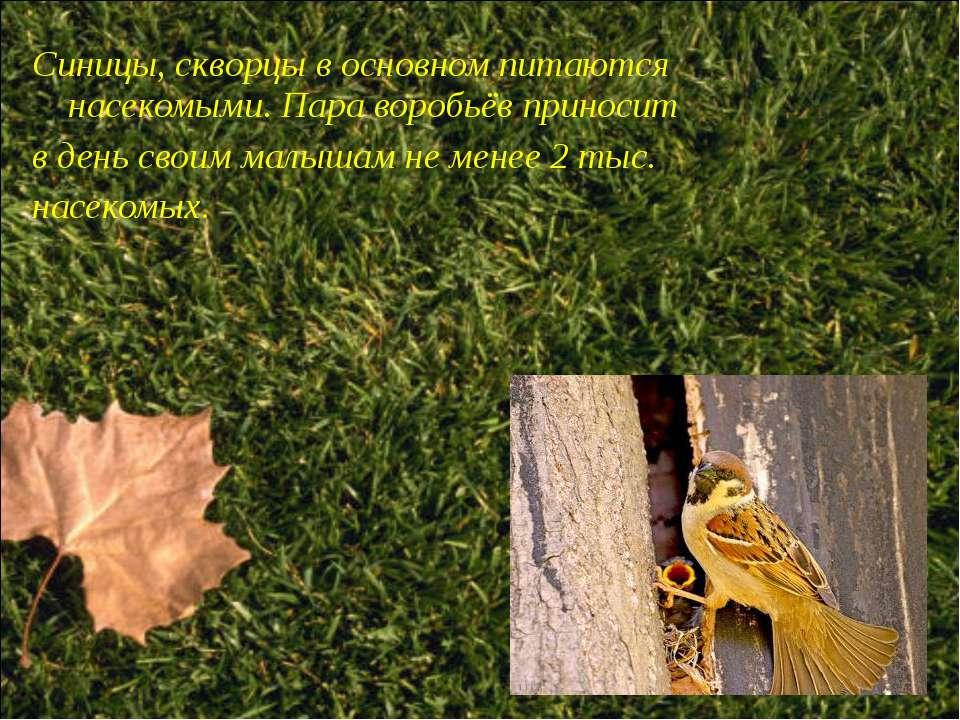 Синицы, скворцы в основном питаются насекомыми. Пара воробьёв приносит в день...