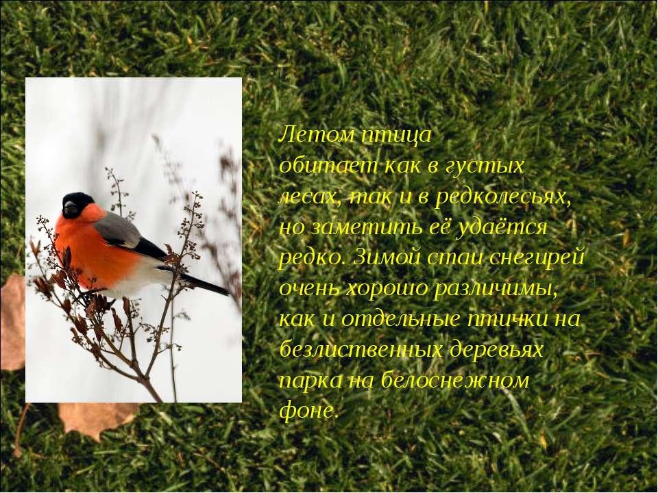 Летом птица обитает как в густых лесах, так и в редколесьях, но заметить её у...