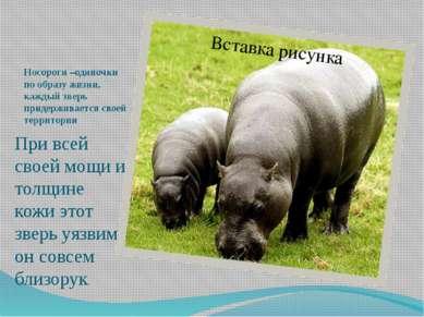 Носороги –одиночки по образу жизни, каждый зверь придерживается своей террито...