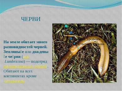 ЧЕРВИ На земле обитает много разновидностей червей. Земляны еилидождевы е ч...