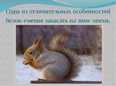 Одна из отличительных особенностей белок-умение запасать на зиму орехи.