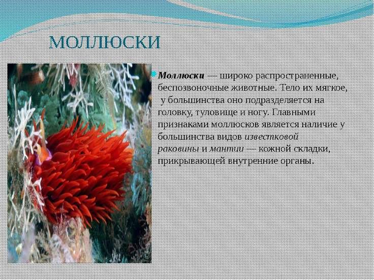 МОЛЛЮСКИ Моллюски— широко распространенные, беспозвоночные животные. Тело их...