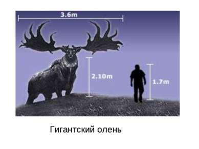 Гигантский олень