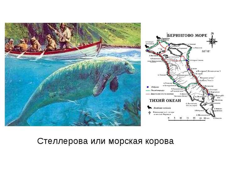 Стеллерова или морская корова