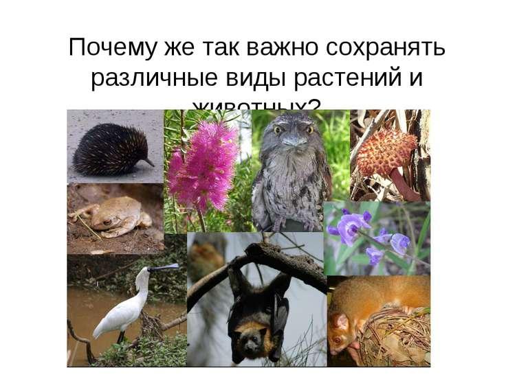 Почему же так важно сохранять различные виды растений и животных?