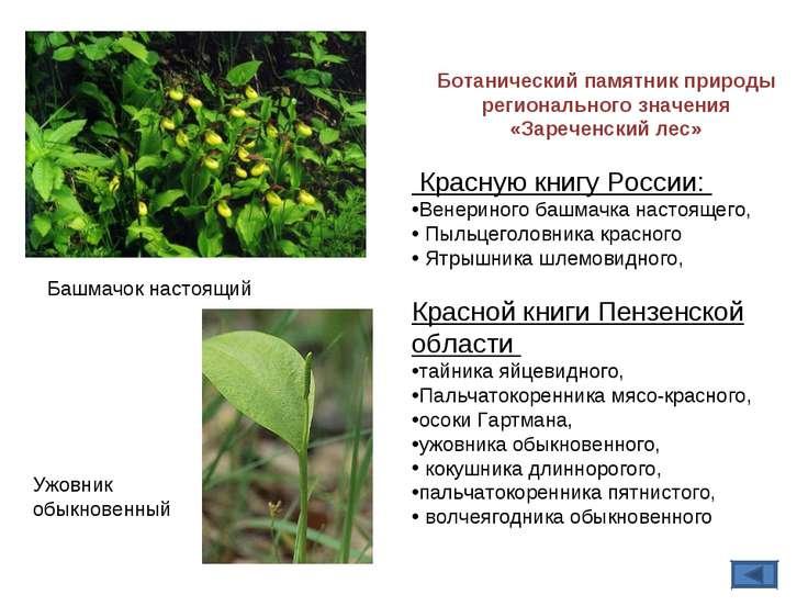 Башмачок настоящий Ботанический памятник природы регионального значения «Заре...