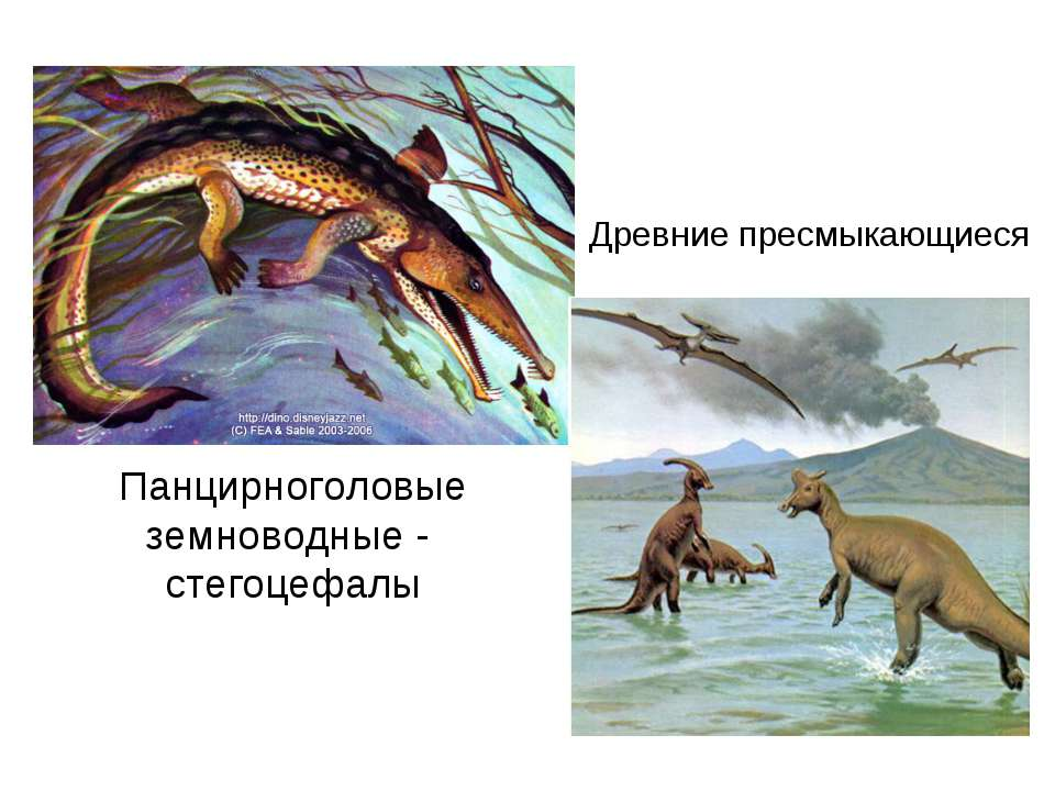 Панцирноголовые земноводные - стегоцефалы Древние пресмыкающиеся