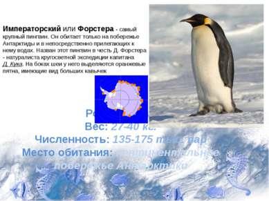 Рост: 112 см. Вес: 27-40 кг. Численность: 135-175 тыс. пар Место обитания: ко...