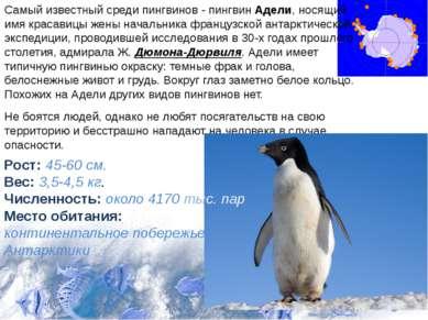 Самый известный среди пингвинов - пингвин Адели, носящий имя красавицы жены н...