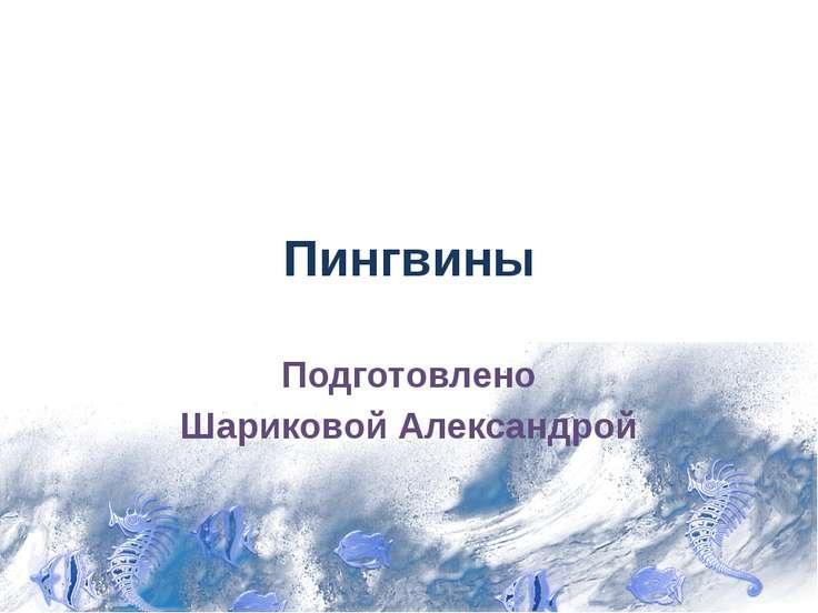 Пингвины Подготовлено Шариковой Александрой