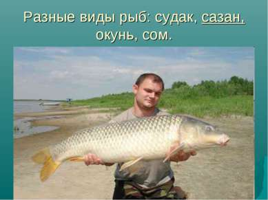 Разные виды рыб: судак, сазан, окунь, сом.