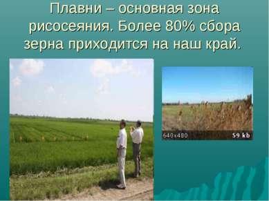 Плавни – основная зона рисосеяния. Более 80% сбора зерна приходится на наш край.