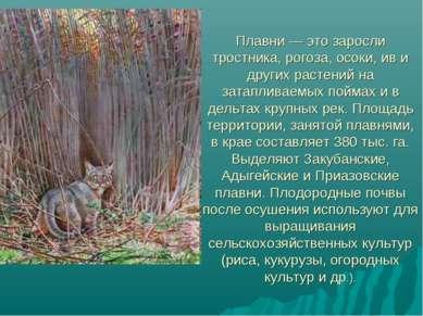 Плавни — это заросли тростника, рогоза, осоки, ив и других растений на затапл...