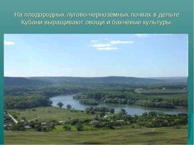 На плодородных лугово-чернозёмных почвах в дельте Кубани выращивают овощи и б...