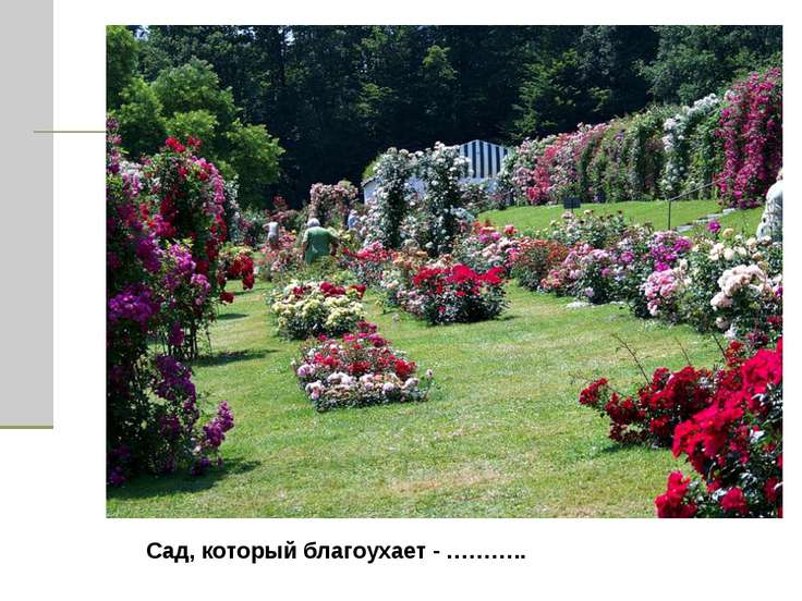 Сад, который благоухает - ………..