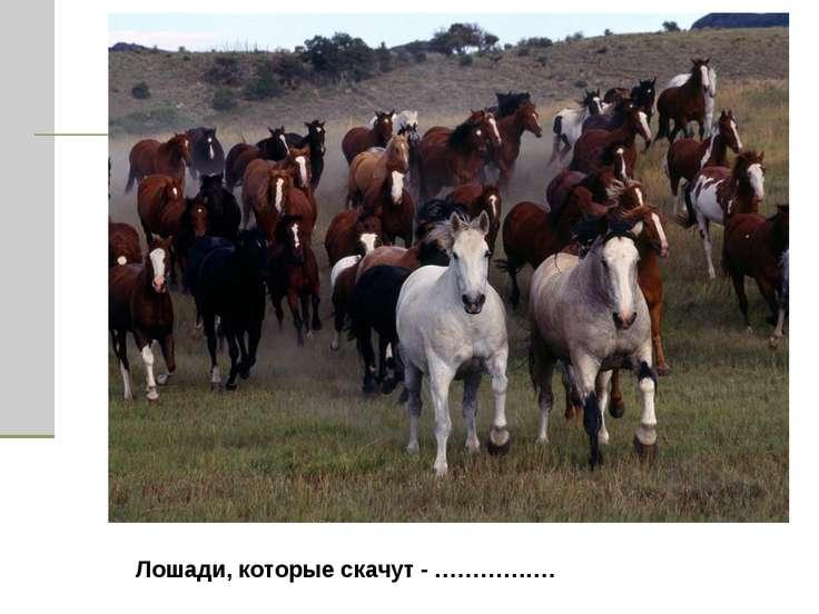 Лошади, которые скачут - …………….