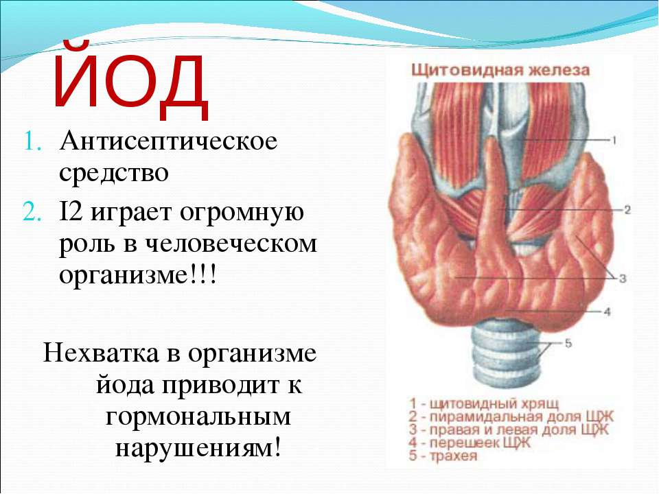 ЙОД Антисептическое средство I2 играет огромную роль в человеческом организме...