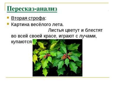 Пересказ-анализ Вторая строфа: Картина весёлого лета. Листья цветут и блестят...