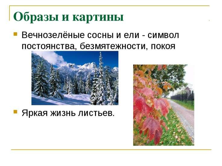 Образы и картины Вечнозелёные сосны и ели - символ постоянства, безмятежности...