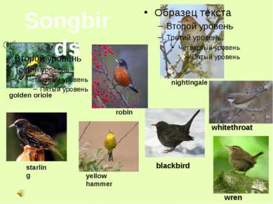 Songbirds nightingale golden oriole robin starling yellow hammer blackbird wh...