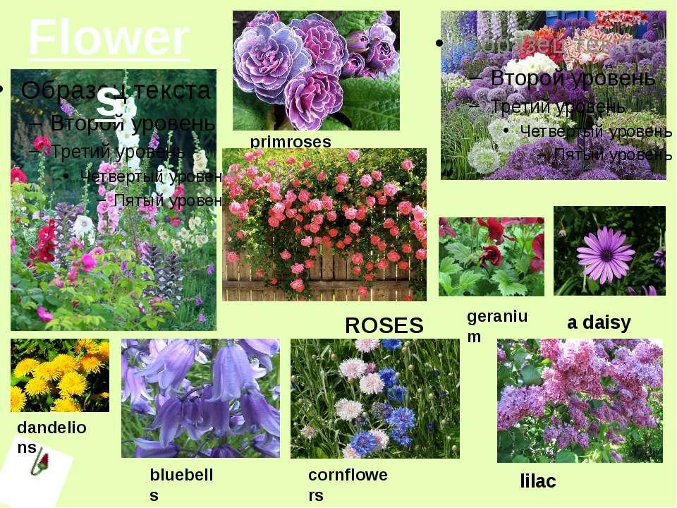 Flowers bluebells cornflowers lilac a daisy primroses ROSES dandelions geranium