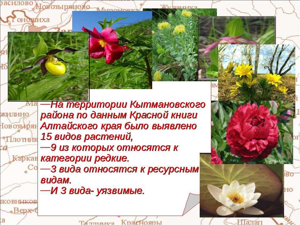 На территории Кытмановского района по данным Красной книги Алтайского края бы...