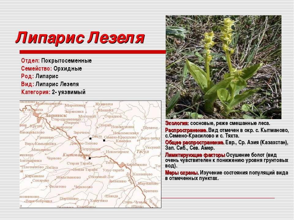 Липарис Лезеля Отдел: Покрытосеменные Семейство: Орхидные Род: Липарис Вид: Л...