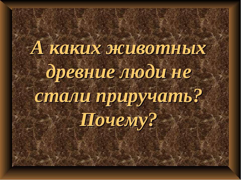 А каких животных древние люди не стали приручать? Почему?