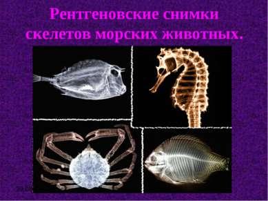Рентгеновские снимки скелетов морских животных.