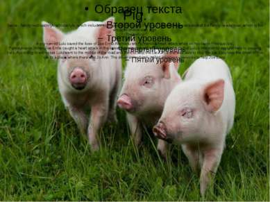 Pig. Swine - family nezhvachnyh artiodactyls, which includes eightspecies, in...