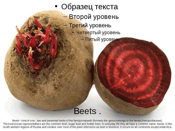 Beets . Beets - kind of one-, two-and perennial herbs of the familyAmaranth (...
