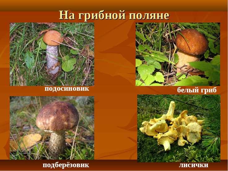На грибной поляне подосиновик подберёзовик белый гриб лисички
