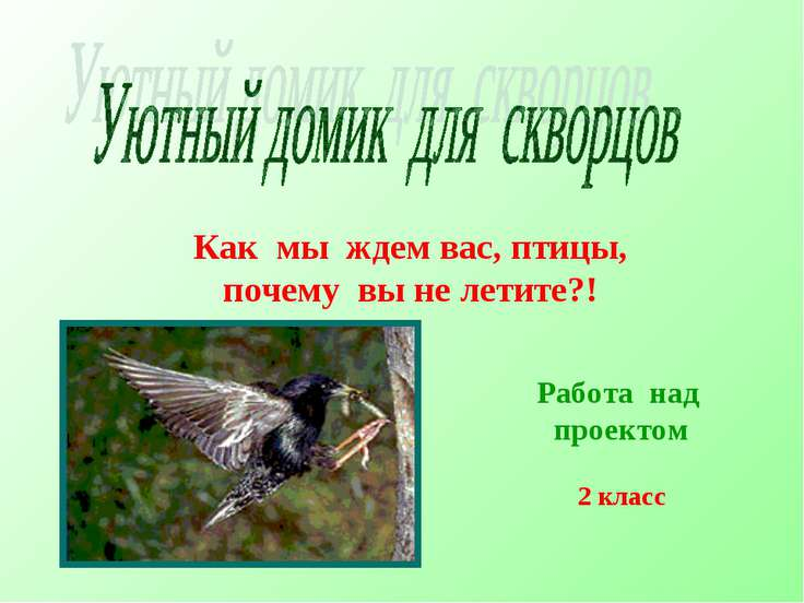 Как мы ждем вас, птицы, почему вы не летите?! Работа над проектом 2 класс
