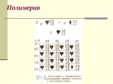 Полимерия