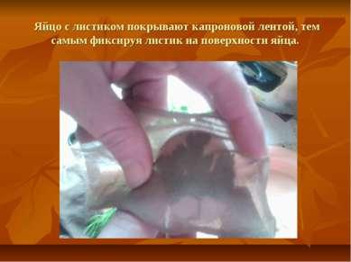 Яйцо с листиком покрывают капроновой лентой, тем самым фиксируя листик на пов...