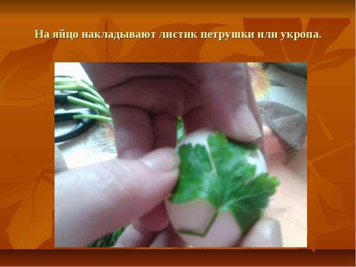 На яйцо накладывают листик петрушки или укропа.