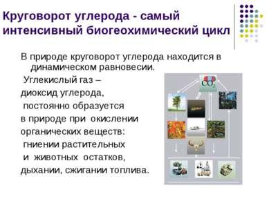 Круговорот углерода - самый интенсивный биогеохимический цикл В природе круго...