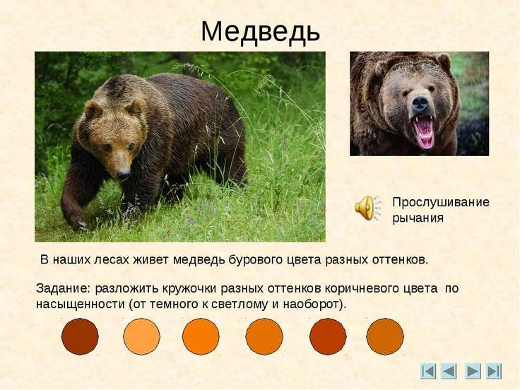 Медведь Прослушивание рычания В наших лесах живет медведь бурового цвета разн...
