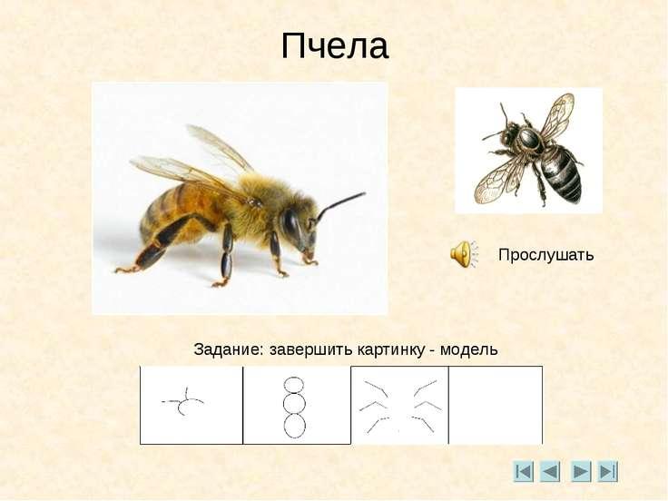 Пчела Прослушать Задание: завершить картинку - модель