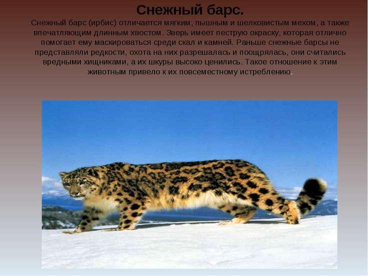 Снежный барс. Снежный барс (ирбис) отличается мягким, пышным и шелковистым ме...