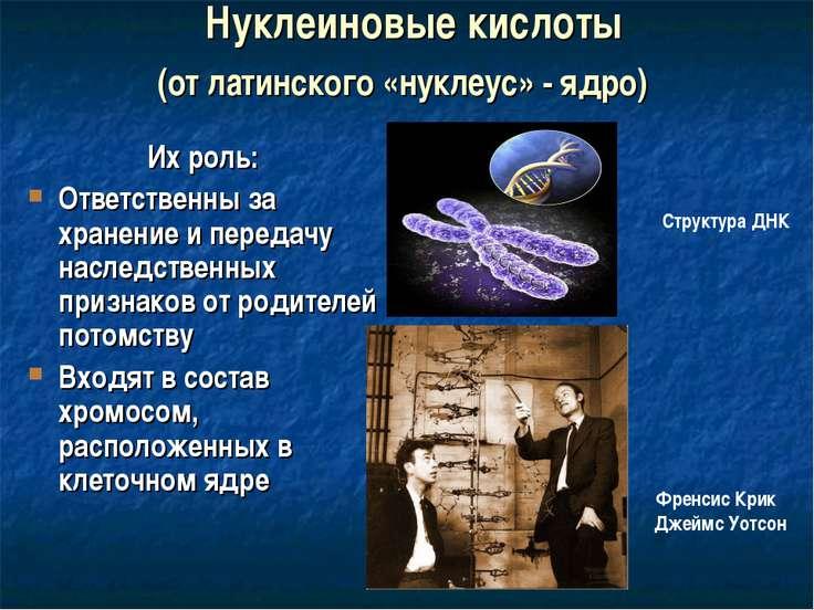 Нуклеиновые кислоты Их роль: Ответственны за хранение и передачу наследственн...