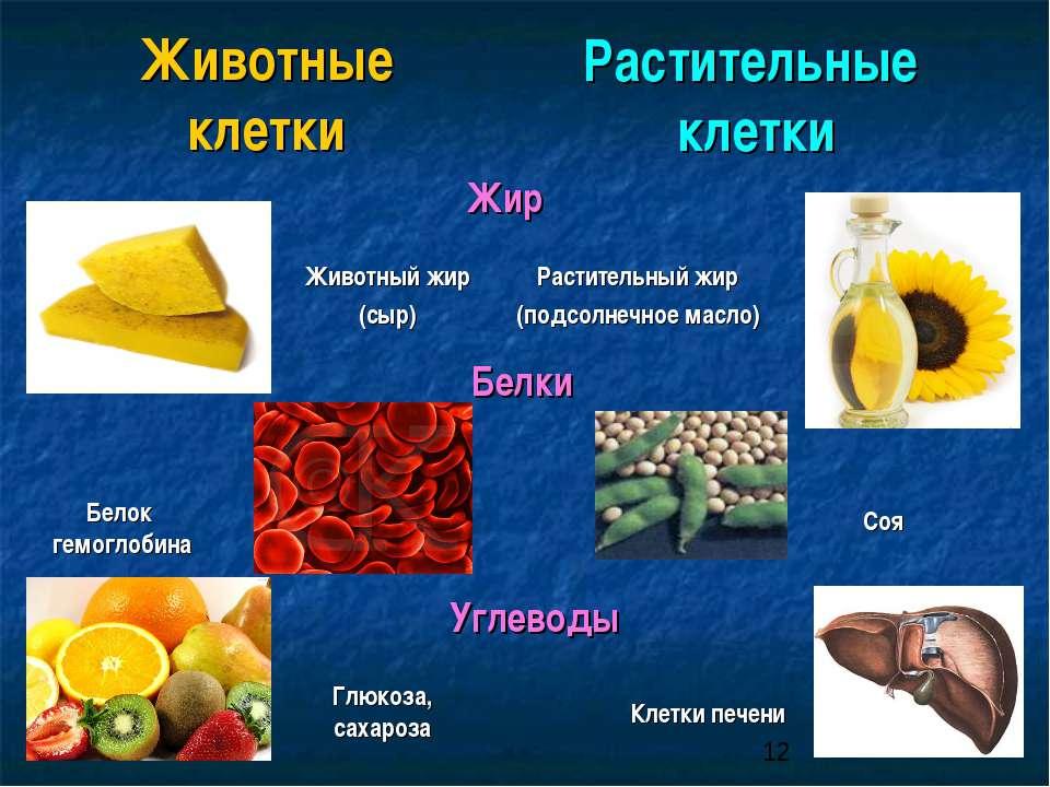 Животные клетки Растительные клетки Жир Растительный жир (подсолнечное масло)...