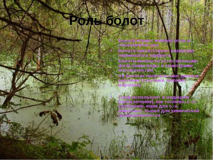 Роль болот Болота играют важную роль в образовании рек. Болота препятствуют р...