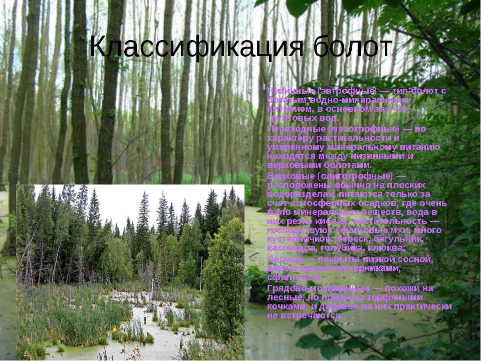 Классификация болот Низинные (эвтрофные) — тип болот с богатым водно-минераль...