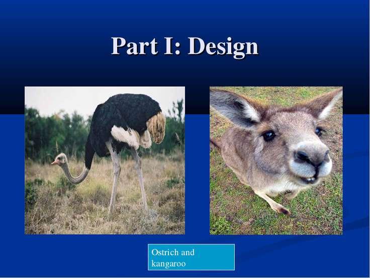 Part I: Design Ostrich and kangaroo