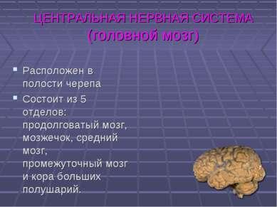 ЦЕНТРАЛЬНАЯ НЕРВНАЯ СИСТЕМА (головной мозг) Расположен в полости черепа Состо...