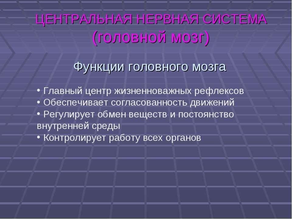 ЦЕНТРАЛЬНАЯ НЕРВНАЯ СИСТЕМА (головной мозг) Функции головного мозга Главный ц...