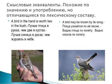 A bird in the hand is worth two in the bush.-Лучше птица в руках, чем две в к...