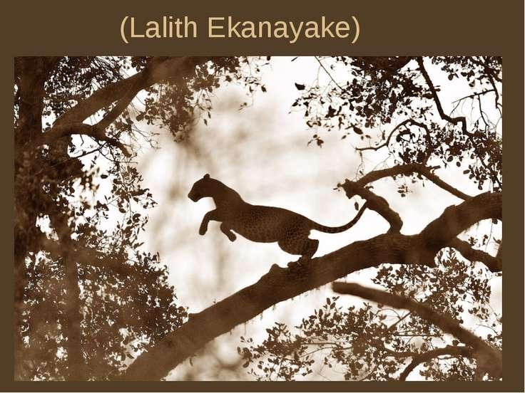 (Lalith Ekanayake)