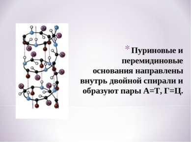 Пуриновые и перемидиновые основания направлены внутрь двойной спирали и образ...